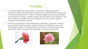 flower companies farming in colombia economical activities agriculture in