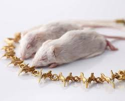 jewelry made from hair jewelry made from hair and rodent bones