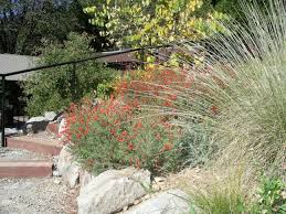 Gardening Picture Gardening With California Native Plants The Real Dirt Blog Anr