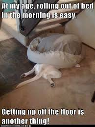 Dog In Bed Meme - i has a hotdog wrong side of the bed funny dog pictures dog