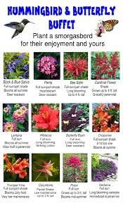 Garden Plants Names And Pictures by 12 Plants To Attract Hummingbirds And Butterflies