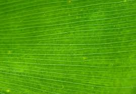 free green palm leaf closeup photo background texture www