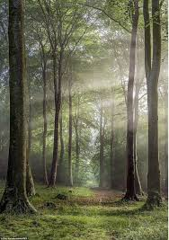 best 25 pictures of trees ideas on what is forest