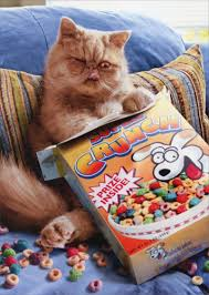 cereal cat pop up stand out funny birthday card by avanti press