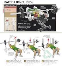 Rep Chart For Bench Press Flat Bench Press Muscles Worked Part 24 Muscles Worked Home