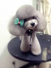 repinned asian inspired dog grooming dog grooming pinterest