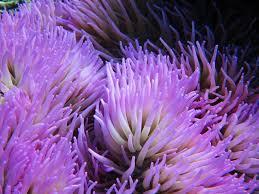 1000x750px 941723 sea anemone 862 01 kb 14 08 2015 by billy joe