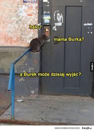 Burka Meme - mama burka mamaedka pinterest meme memes and humor