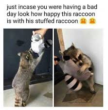 Racoon Meme - dopl3r com memes just in case you were having a bad day look