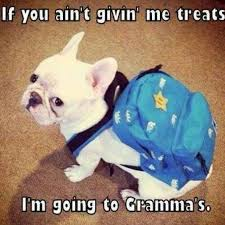 French Meme - 10 best french bulldog memes of all time