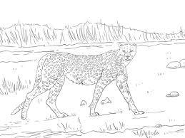 tanzanian cheetah coloring free printable coloring pages