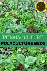 Permaculture Vegetable Garden Layout Permaculture What Is Polyculture Family Food Garden