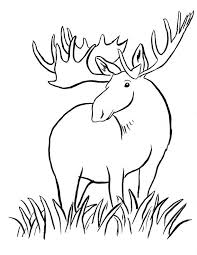 moose coloring pages download print free