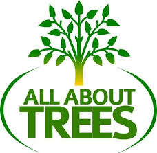 all about trees your tree company for 20 years