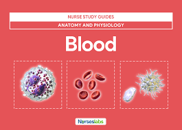 blood anatomy and physiology study guide for nurses