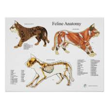 Dog Anatomy Poster Veterinary Clinic Posters Zazzle