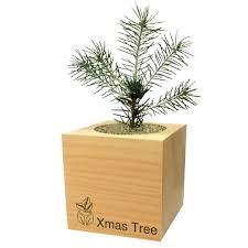 Wohnzimmerm El Pinie Feel Green Merry Christmas 2 Ecocube Baum Im Holzwürfel