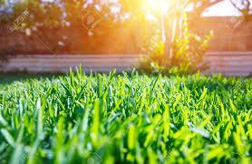 beautiful view on cute backyard in sunny day fresh green grass