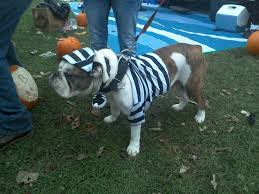 85 cute halloween pet costumes to charm up your dazzling pets
