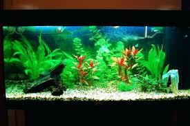 aquarium decoration ideas freshwater photogiraffe me img full freshwater aquarium desig