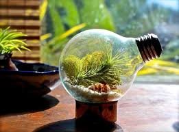 home decoration astounding terrarium plants design inspiration