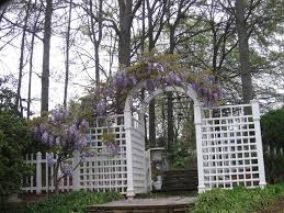 Build A Rose Trellis 78 Best Climbers Roses Wisteria Trellis U0027s Images On Pinterest