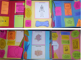What Is Human Anatomy And Physiology 1 Apologia Exploring Creation With Human Anatomy U0026 Physiology