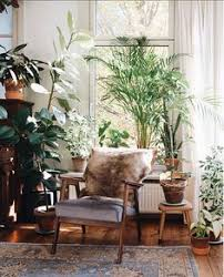 Plants Home Decor Interior Jungle From Moon To Moon Moon Lush And Interiors
