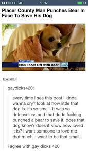 Gay Bear Meme - the best bear memes memedroid
