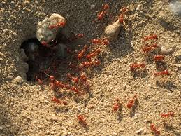 the last word on nothing guest post when the ants win