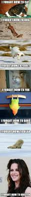 How To Meme - 1008 best funny images on pinterest so funny ha ha and funny images