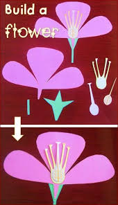 Image For Flowers Best 25 Flower Parts Ideas On Pinterest Parts Of A Flower