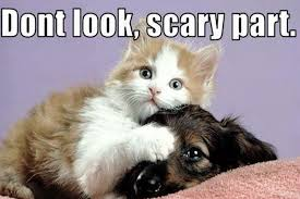 Cute Pet Memes - weekend wit cute pet memes