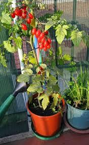 gem se pflanzen balkon balkonpflanzen balkon gestalten gardening