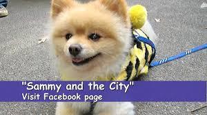 halloween city lafayette louisiana carl schurz park halloween dog parade youtube