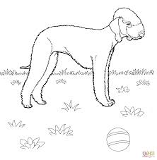 bedlington terrier coloring page free printable coloring pages