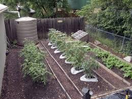 Garden Ideas With Pallets Wooden Pallet Cauliflower Garden Image 10 Pallet Gardening Ideas