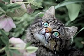 reaction to rabies vaccine in cats symptoms causes diagnosis