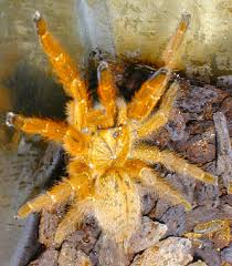 caring for your new tarantula with pictures