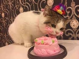 cat wearing hat eating a birthday cake will inspire you to take