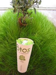 bio urn limewedge net turn your ashes to a tree with the bios urn x martin