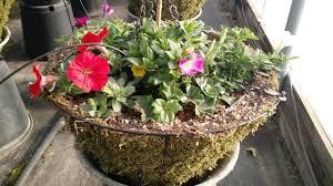 flower baskets wing flower baskets city of wing