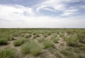 native plants of china the greening of china u0027s kubuqi desert what we can learn