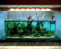 Aquascape Fish Etc Com Wp Content Uploads 2012 03 Aquascapin