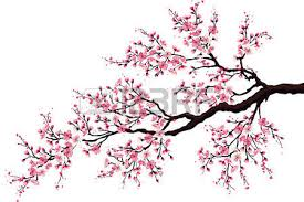 cherry tree images u0026 stock pictures royalty free cherry tree