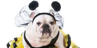 pet halloween costumes 2017 these are the most popular