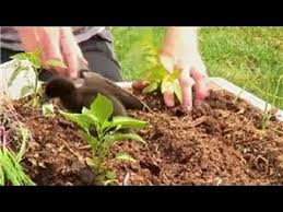 Vegetable Beds Vegetable Gardening How To Plant Raised Vegetable Beds Youtube