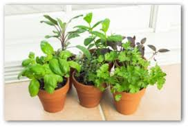 indoor kitchen garden ideas indoor vegetable garden planning tips and ideas