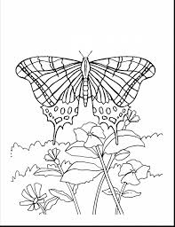 extraordinary butterfly flower coloring pages with coloring
