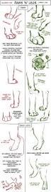 Dog Anatomy Front Leg Big Cat Paw And Leg Tutorial By Tamberella On Deviantart